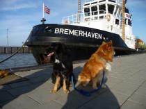 Schlepper Bremerhaven